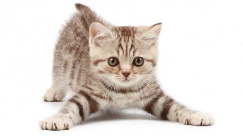 Béarn : Un trafic de chatons démantelé