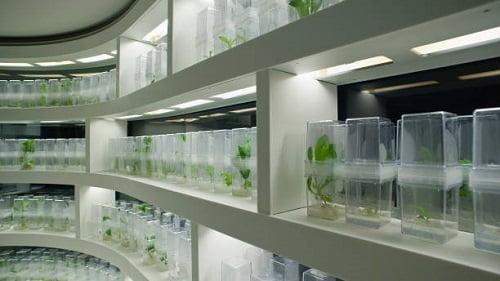 Lacq : L'entreprise de biotechnologie a débuté la construction de son usine